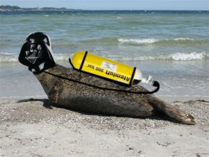 20150401 Aprilscherz Seehunde 2